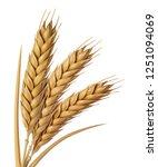 Yellow Wheat Head Illustration...