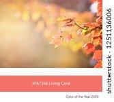 maple leaves in autumn sunlight ... | Shutterstock . vector #1251136006