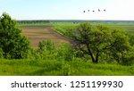 Agricultural Summer Rural...