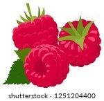 raspberry isolated on white... | Shutterstock .eps vector #1251204400