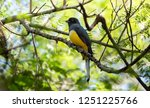 a bright endemic yellow   green ... | Shutterstock . vector #1251225766