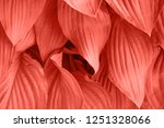 foliage with main trendy living ... | Shutterstock . vector #1251328066