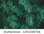 christmas fir tree background... | Shutterstock . vector #1251330736