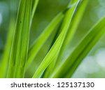 detail of reed plants near to a ... | Shutterstock . vector #125137130