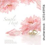 Stock photo pink rose on white background with sample text 125145956