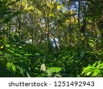 sunlight and foliage in... | Shutterstock . vector #1251492943