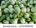 fresh eggplant green organic at ... | Shutterstock . vector #1251498940