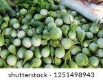 fresh eggplant green organic at ... | Shutterstock . vector #1251498943