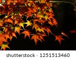 autumn vibes in kansai  kyoto... | Shutterstock . vector #1251513460