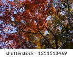 autumn vibes in kansai  kyoto... | Shutterstock . vector #1251513469