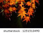 autumn vibes in kansai  kyoto... | Shutterstock . vector #1251513490