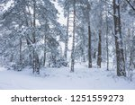 winter frosty day with... | Shutterstock . vector #1251559273