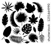 set of leaves silhouettes... | Shutterstock .eps vector #1251664990
