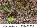 plastic synthetic reproduction...   Shutterstock . vector #1251682750