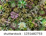 plastic synthetic reproduction...   Shutterstock . vector #1251682753