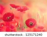 Red Poppies On The Field With...