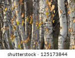 Dry Leaves On A Background Of...