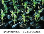 the leaves of the green leaves... | Shutterstock . vector #1251930286
