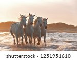 running horses on water  | Shutterstock . vector #1251951610