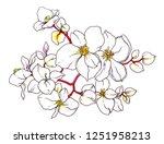 white jasmine exotic flower... | Shutterstock . vector #1251958213