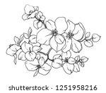 white jasmine exotic flowers.... | Shutterstock . vector #1251958216