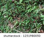 european rare moss species...   Shutterstock . vector #1251980050