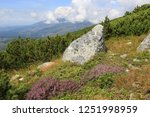 old stones on mountain meadow... | Shutterstock . vector #1251998959