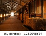 in the stable with horses in a... | Shutterstock . vector #1252048699