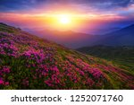 scenic summer dawn floral image ... | Shutterstock . vector #1252071760