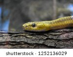 yellow snake on log close up | Shutterstock . vector #1252136029