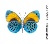 Stock photo butterfly on a white background in high definition 125234144