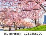 spring in japan  the shioiri... | Shutterstock . vector #1252366120