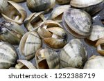 Clam Is A Common Name For...