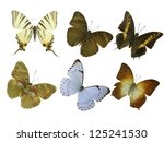 six butterfly white | Shutterstock . vector #125241530