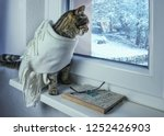 Stock photo the cat in the scarf looks out the window winter concept 1252426903