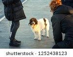cute shaggy dog with sad smart...   Shutterstock . vector #1252438123