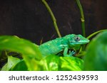 lizard close view  | Shutterstock . vector #1252439593