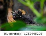 lizard closeup in grass | Shutterstock . vector #1252445203