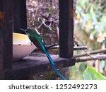 a close up shot of colibri | Shutterstock . vector #1252492273
