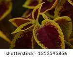 bizarre and unique leaf and... | Shutterstock . vector #1252545856