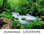 "tourist attraction ""oirase... | Shutterstock . vector #1252554496"