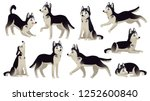 husky dog poses. cartoon... | Shutterstock .eps vector #1252600840