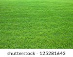 Green lawn background. Nature background. Green grass texture. Spring fresh lawn carpet