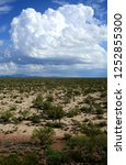 the sonora desert in central... | Shutterstock . vector #1252855300