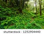 natural green fern in the forest | Shutterstock . vector #1252904440