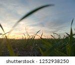 detail of moisture drops on... | Shutterstock . vector #1252938250
