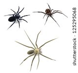 spiders | Shutterstock .eps vector #125295068