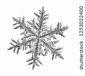 snowflake isolated on white... | Shutterstock .eps vector #1253022400