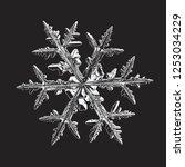 snowflake isolated on black... | Shutterstock .eps vector #1253034229