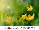 buttercup flowers in the field | Shutterstock . vector #125304713